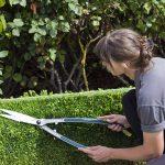 Gardener Kneeling Trimming Hedges