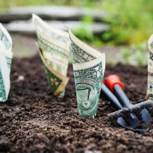 Does Gardening Really Save Money?