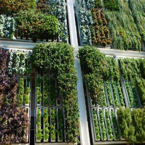 Best Vertical Garden Kit & Planter Deals